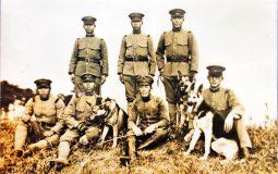 軍犬としてのシェパード犬